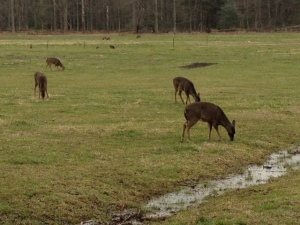 Deer were grazing everywhere. Human visitors didn't seem to bother them.