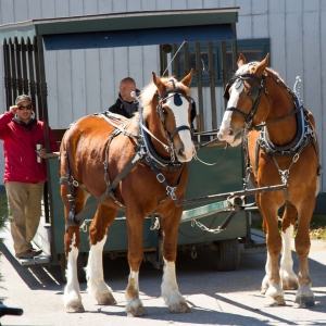 One of the horse-drawn trolleys.