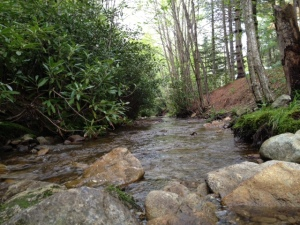 Babbling brook.