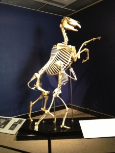 Horse history exhibit.