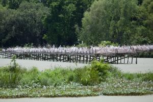 Snowy white egret bird sanctuary.