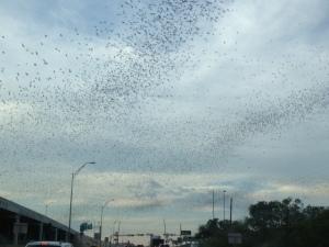 Thousands of bats!