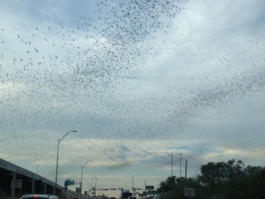 Thousands of bats!
