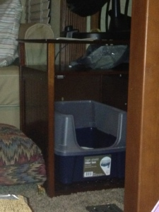 Litter box container with door open