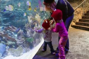 Scarlet, Violet, Elizabeth and the fish