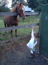 Feeding carrots to the horses across the street