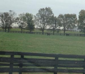 Horses running across a field