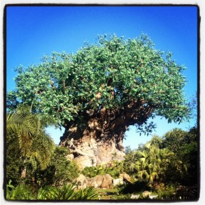 Tree of Life in Animal Kingdom park.