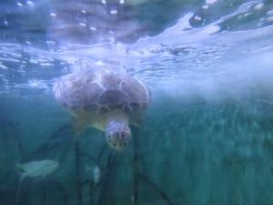 Artsy turtle dive shot