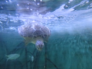 Artsy turtle dive shot