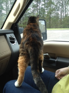 Callie checking out the activity at the rest area
