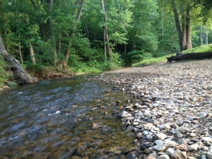 The creek, looking upstream