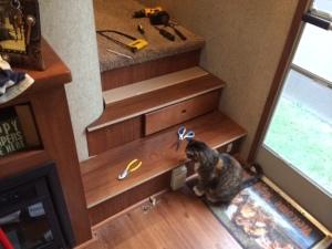 Callie inspects the work so far.