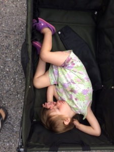 Scarlet wanted a wagon ride, then fell asleep