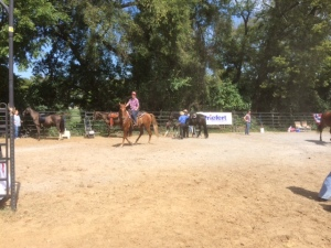 Horses ready to compete