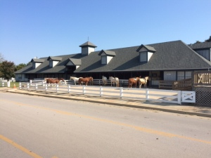 Riding stables