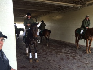 The outrider horses waiting in the tunnel