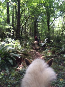 Riding in the woods. Malcolm's horse had a bit of a shaved mane, making it look like a llama in pictures
