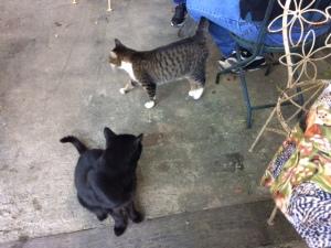 Cats at Farmhouse Cafe