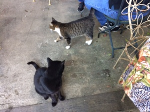 Cats at Farmhouse Cafe